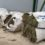 Sorprenden en Baza a una familia recolectando 150 kilos de plantas aromáticas sin permiso