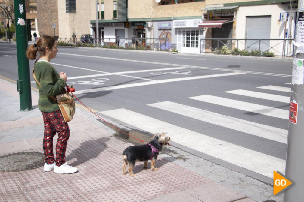 Gente paseando perros - Dani B