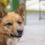 Guía para hacer ejercicio con tu perro en casa durante el confinamiento por coronavirus