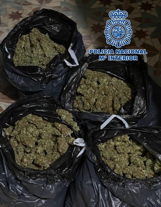 Marihuana_3
