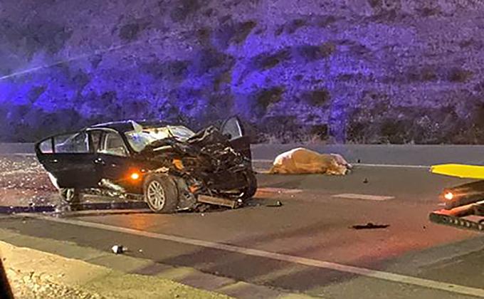 accidente vehiculo becerros A-4100 Purullena - Foto Juanje Gomez