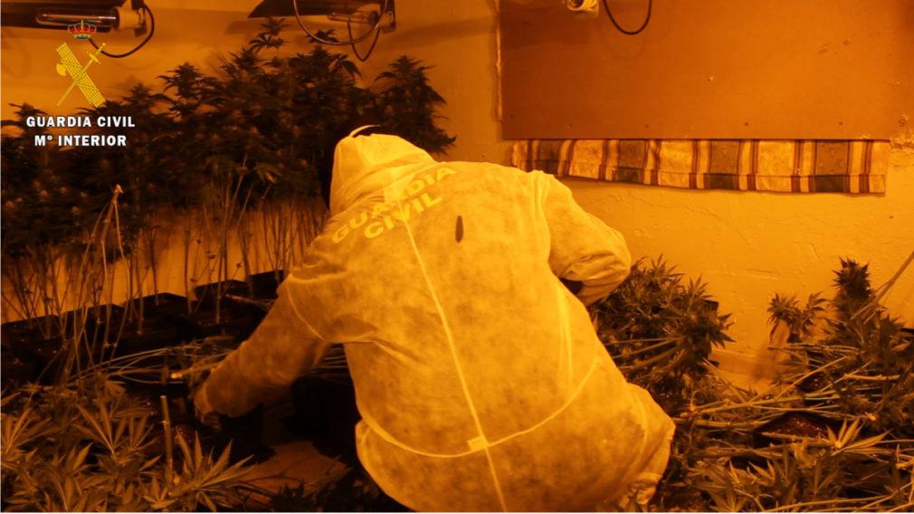 marihuana Almanjáyar