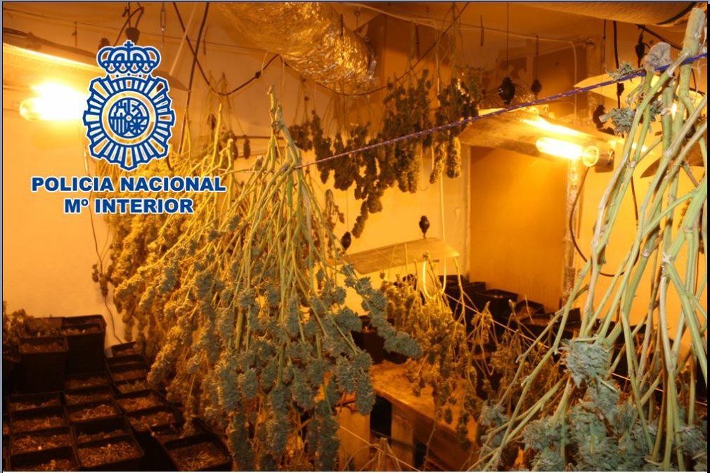 Plantación de marihuana | Foto: Gabinete