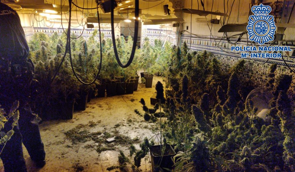 Plantacion_marihuana