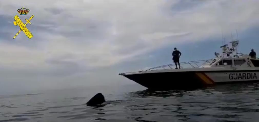 tiburón la mamola