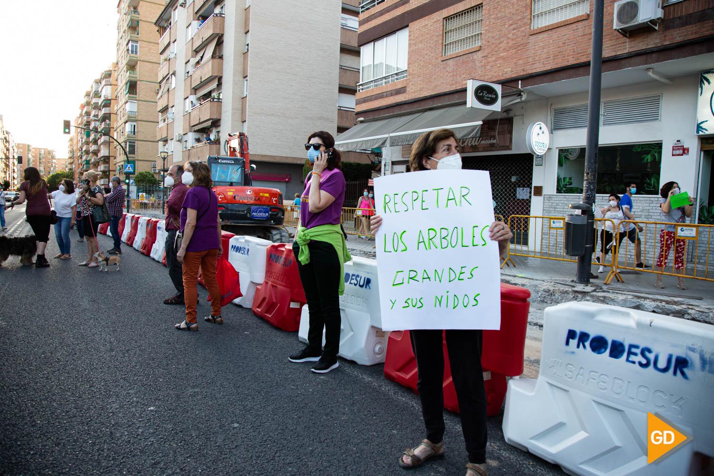 FOTOS TALA DE ARBOLES (1)