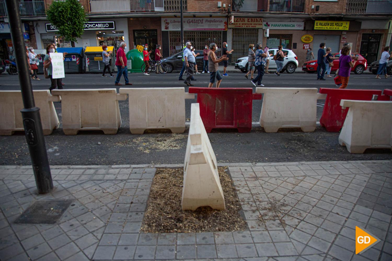 FOTOS TALA DE ARBOLES (10)