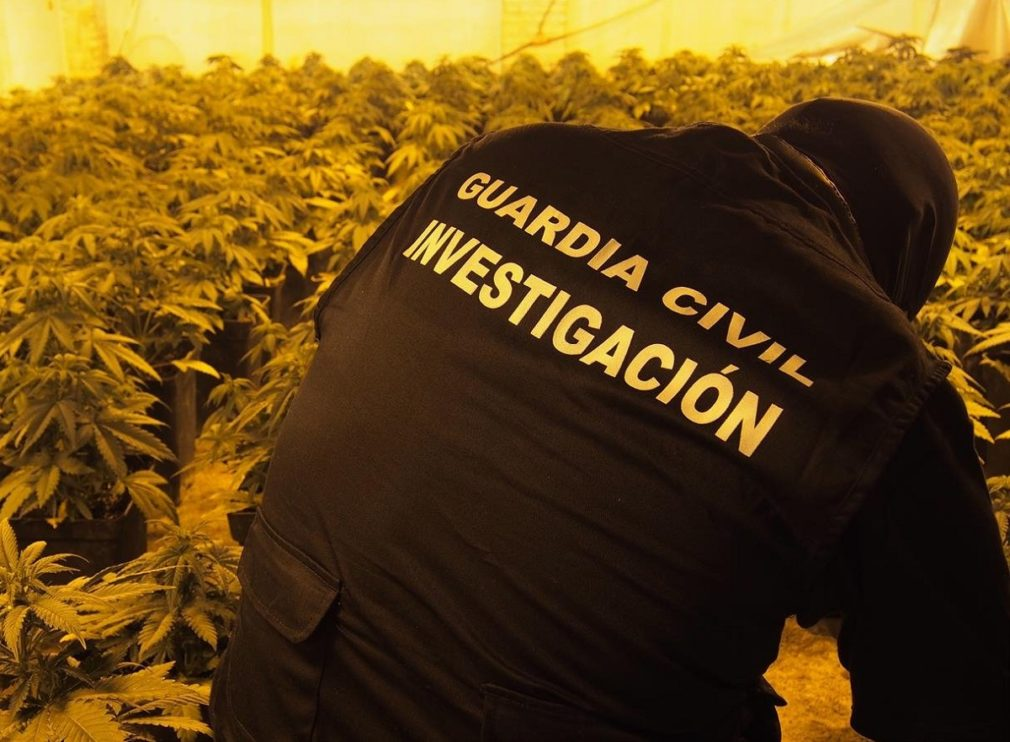 guarida civil marihuana