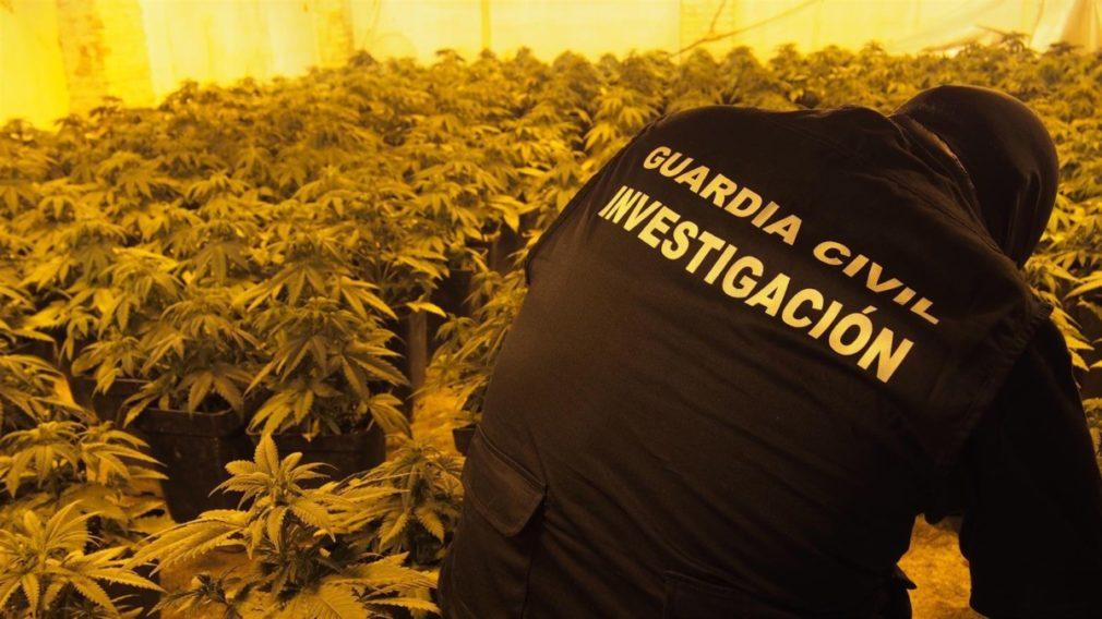 Un agente de la Guardia Civil junto a una plantación de marihuana en una imagen de archivo - GUARDIA CIVIL-ARCHIVO