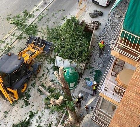 arbol talado avenida barcelona