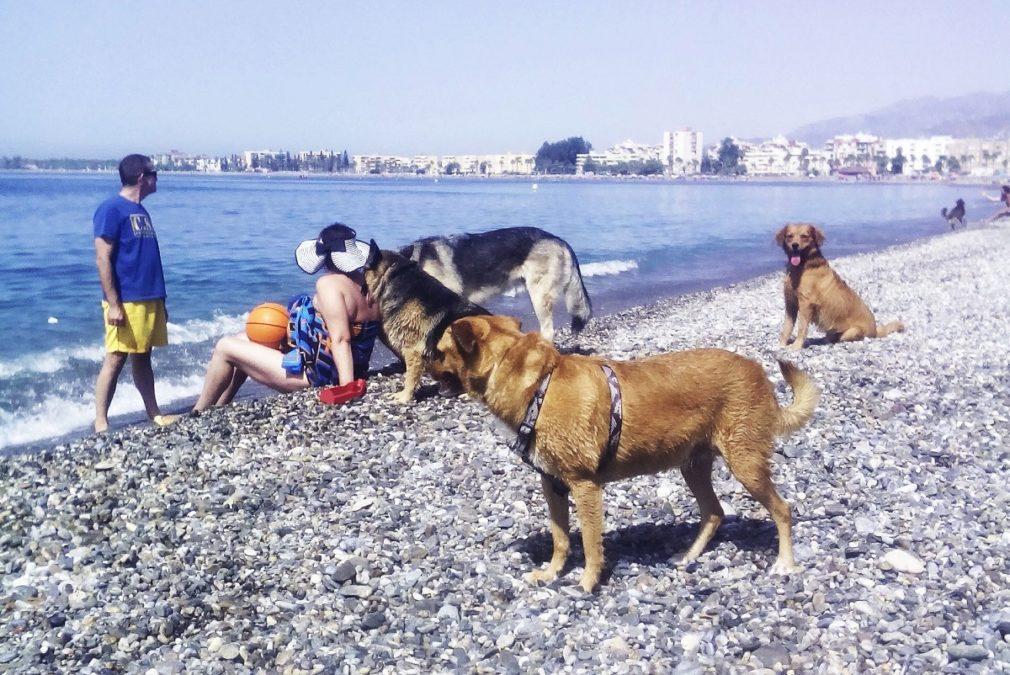 playa perros motril