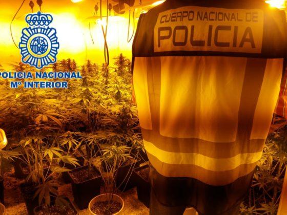 marihuana policia nacional Zona Norte
