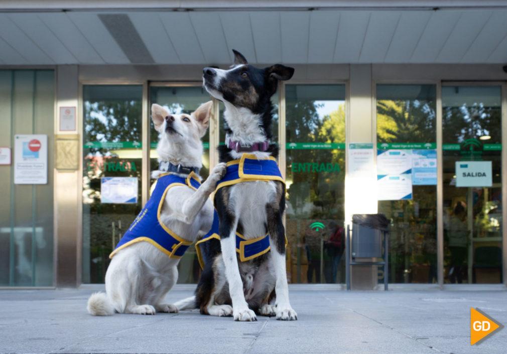 Unidad de terapia canina Carlos Gijon-2